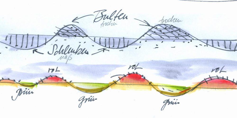 moor-auge-skizze-bulten-schlenken